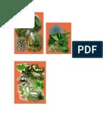Conociendo Las Principales Especies Del Bosque Chileno