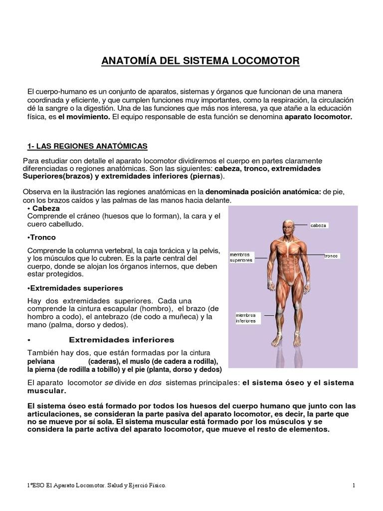 Hermosa La Forma De Estudiar Los Huesos De La Anatomía Regalo ...