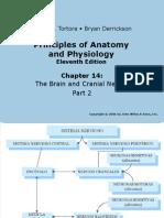 Cerebro Craneales 2
