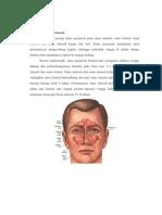 Anatomi Sinus Paranasal.docx