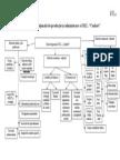 Structura organizatorica