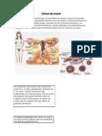 Cancer de Ovario Port a Folio Final