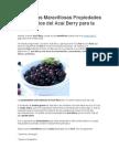 Conoce Las Maravillosas Propiedades y Beneficios Del Acai Berry Para La Salud
