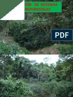 SELECCIÓN    DE   SISTEMAS    AGROFORESTALES.pptx