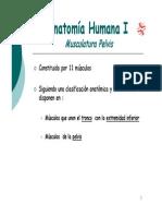 5.3.1.- Musculos de La Pelvis