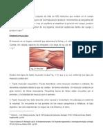 Sistema-Muscular (2).pdf