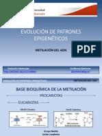 MetilaciónADN