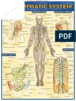 QuickStudy - Lymphatic System.pdf