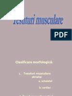 Tesuturi musculare
