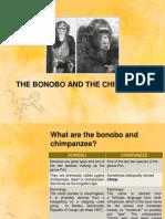 The Bonobo and the Chimpanzee
