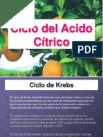 Ciclo Del Acido Citrico
