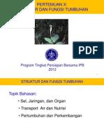 Kuliah 10 Struktur Fungsi Tumbuhan