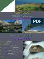 1 Phylum Mollusca