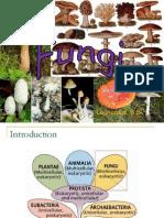bab-5-fungi