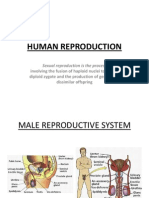 powerpointhumanreproduction