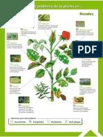Guía Fitosanitaria6.pdf