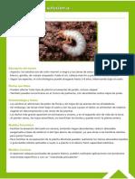 Guía Fitosanitaria11.pdf