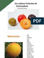 Tipos de fruta.pptx