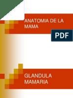 Anatomia+Quirurgica+de+La+Mama