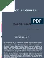 Estructura General Anatomia Humana
