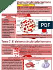 Tema 7 Aparato Circulatorio