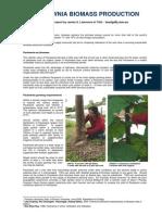 Paulownia Biomass Production