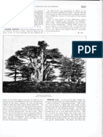 Cedar, Jewish Encyclopedia