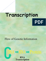 Transcription Lecture- Maniz