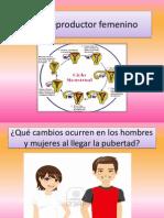Ciclo reproductor femenino