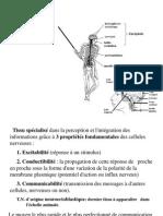 4eme Type Tissu Nerveux