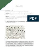 Corynebacterium y Echinococcus Granulosus