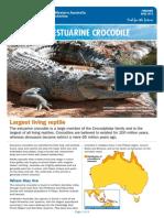 Fact Sheet Estuarine Crocodile