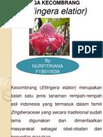 Pp Bunga Kecombrang
