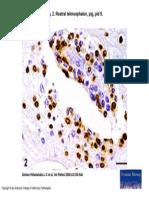 Vet Pathol  43(4) 530-40, Fig. 2 (1)