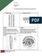 Guia de Texturas - Laboratorio de Microscopía