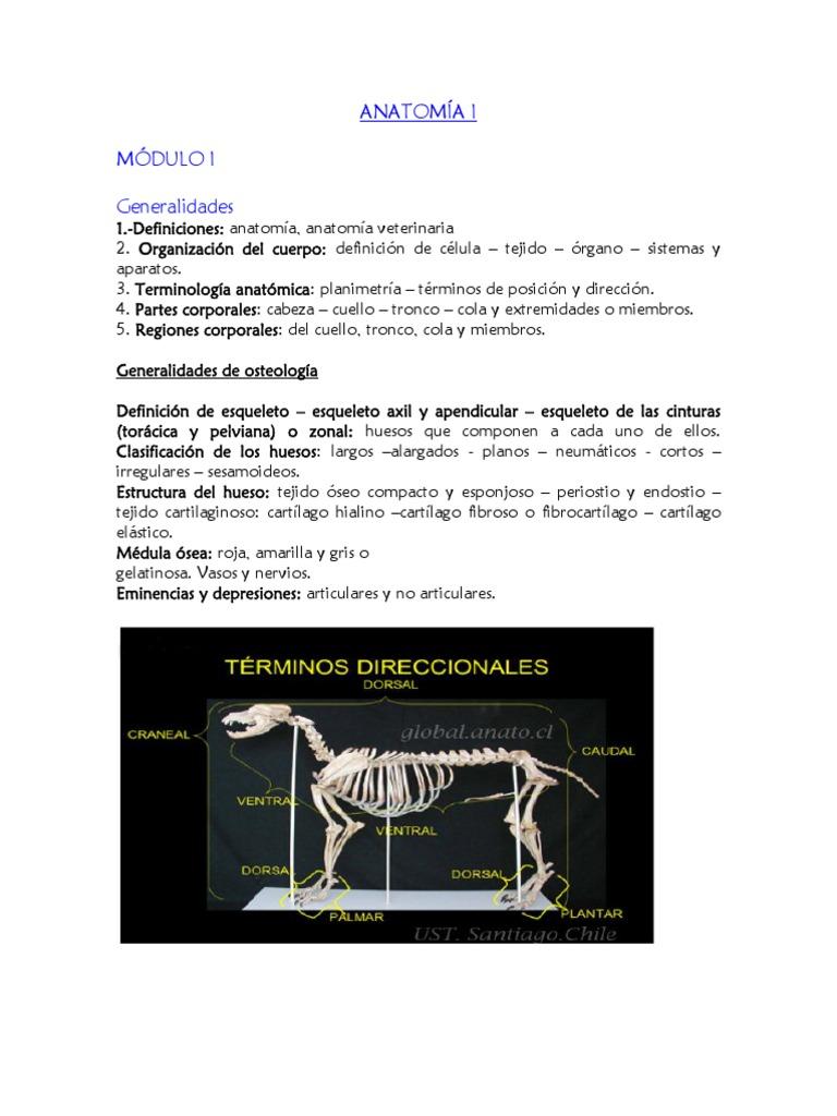 Lujoso Tronco Definición Anatomía Regalo - Imágenes de Anatomía ...