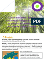Apresentação Manejo Bambu - Ecos Omni (1)