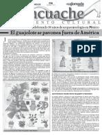 131201 Tlacuache guajolote