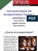 Neuropsicología del envejecimiento normal y patológico