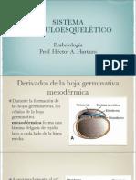 (3) Mesodermo y derivados