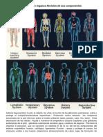 Sistemas de órganos Revisión de sus componentes