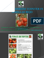 Tomate Hibrido Tointer