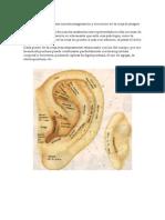 Manual Auriculoterapia
