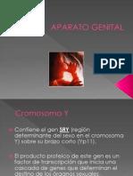APARATO GENITAL.pptx