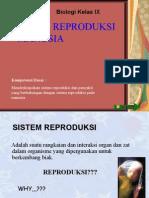 reproduksi manusia