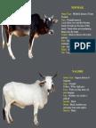 Cow Varieties