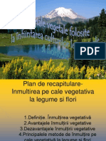 Materiale Vegetale Cultura Floricola