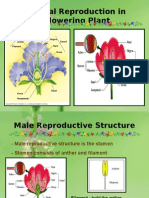 Sexual Reproduction In Flowering Plant