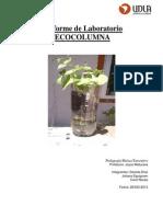 Pauta Informe de Ecocolumna EDU705 (2)