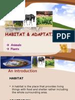 Habitat & Adaptations_pp